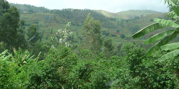 Hills in Burundi