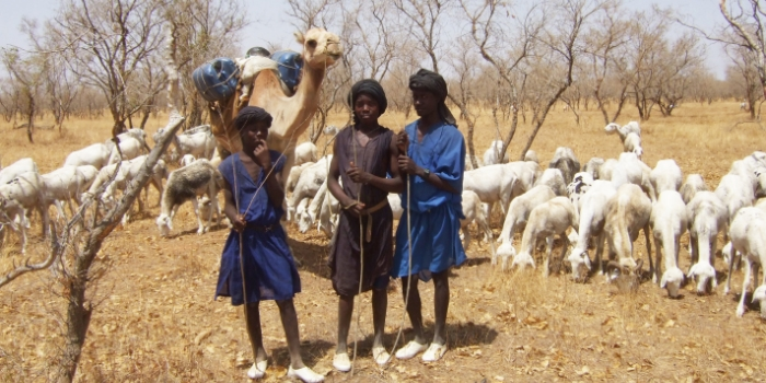Migrant herders from Mauritania on the passage through Mali