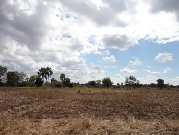 El Niño - Harvest after flooding and drought