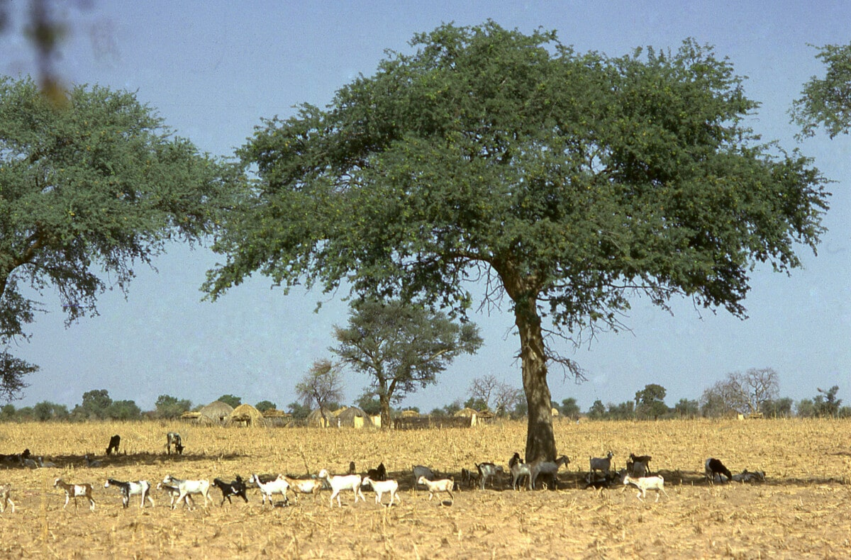 Dry season in Burkina Faso