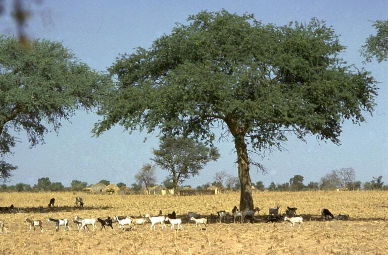 Adaptive Social Protection in the Sahel