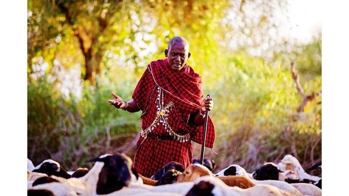 Kenya_Farm-Farmer_tending_goats_fallback