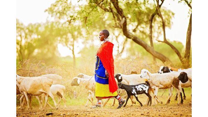 Kenya_Farm-Lady_tending_goats_and_sheep_fallback
