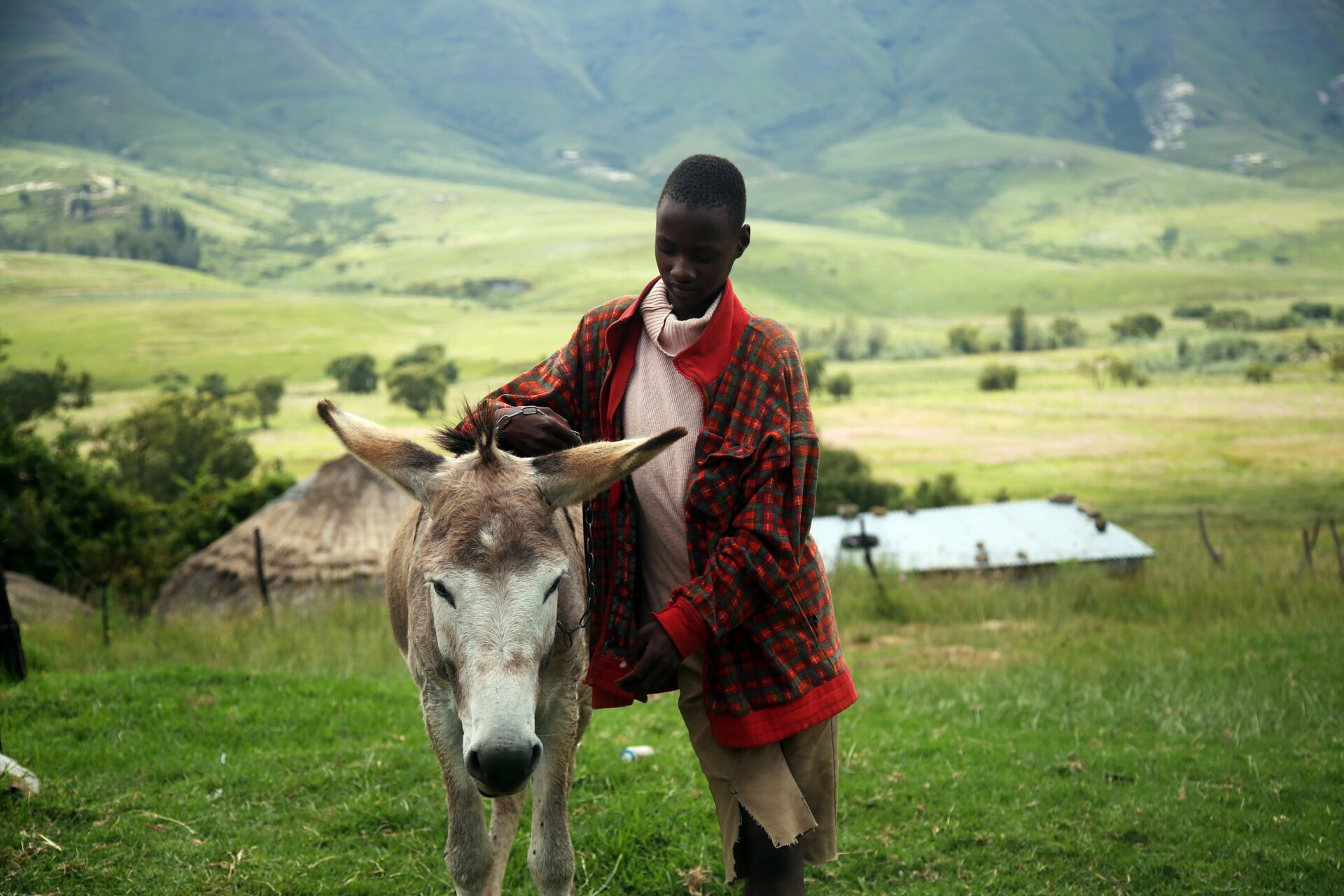 Child leaning on a donkey in the Kingdom of Lesotho