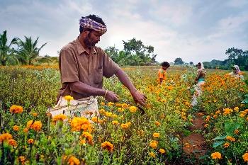 Informal sector workers in a rural area of Karnataka